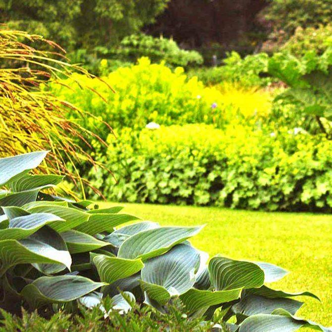 Beau DVS Beregnung   Die Beste Bewässerung Für Ihren Garten